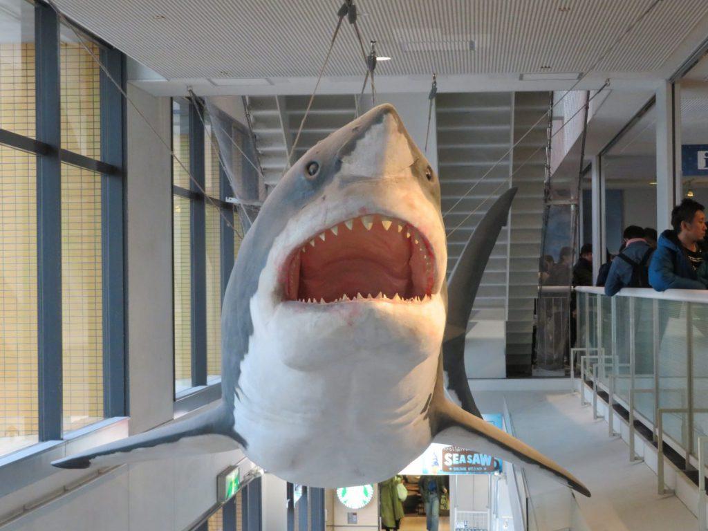 海遊館の出口にある巨大なサメの模型