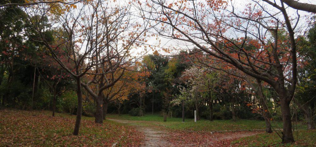 南港野鳥園遊歩道