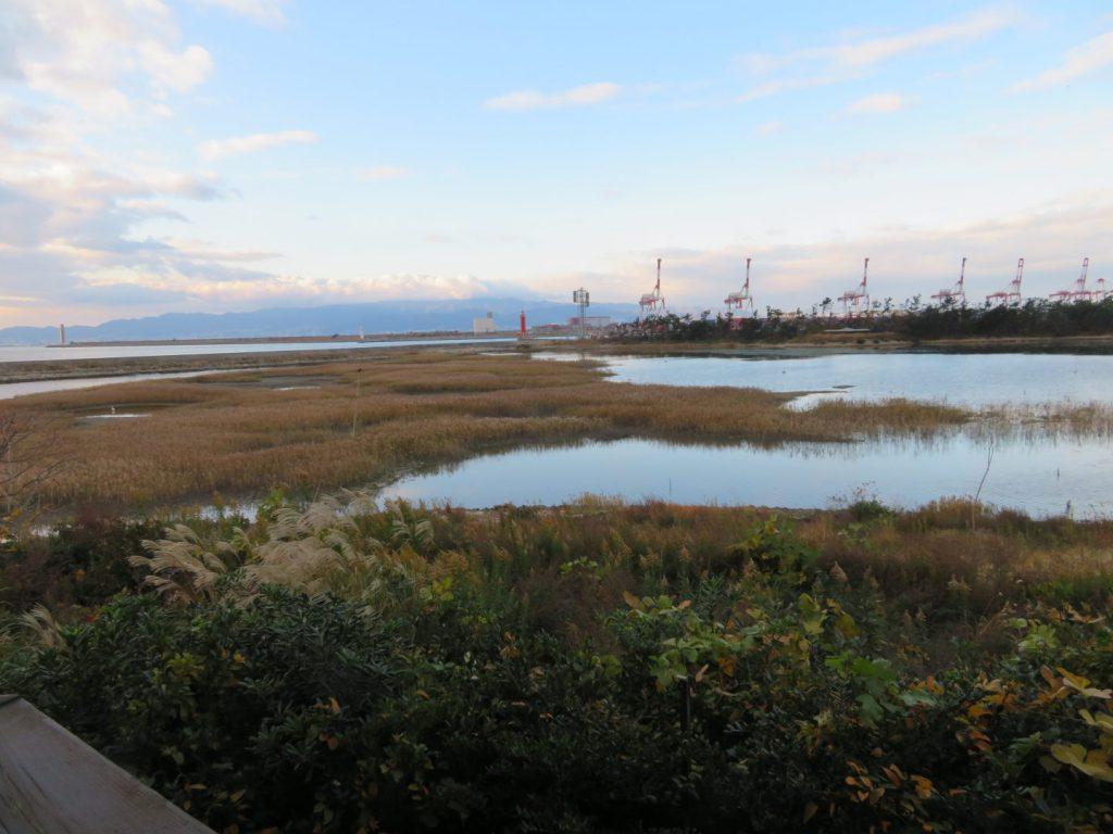 南港野鳥園展望塔からの展望