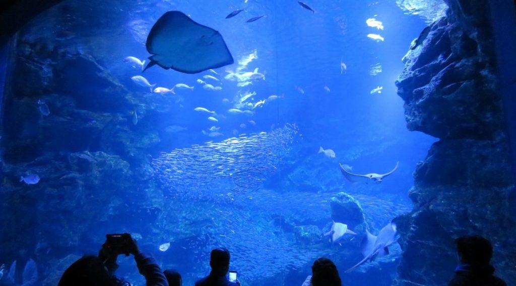 「京都の海」大水槽