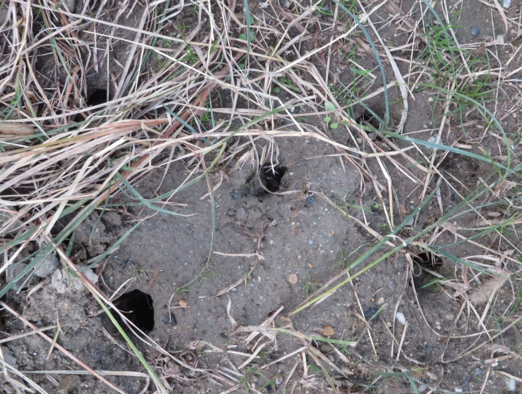 何かの生き物の穴