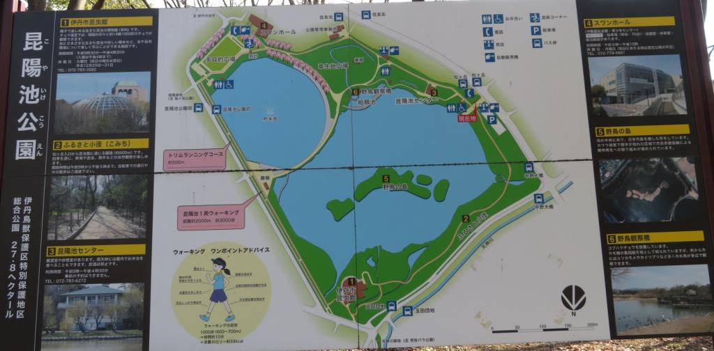 昆陽池公園の地図