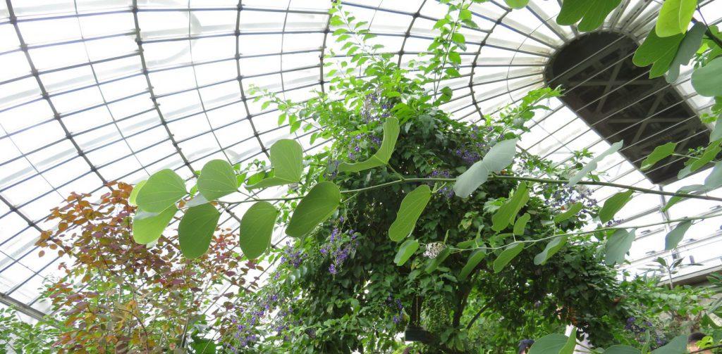 大量のチョウが飛び回るチョウ温室