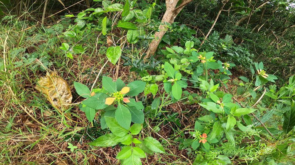 花のような葉っぱをもつ植物