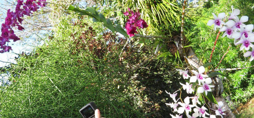 三協ガーデンの花