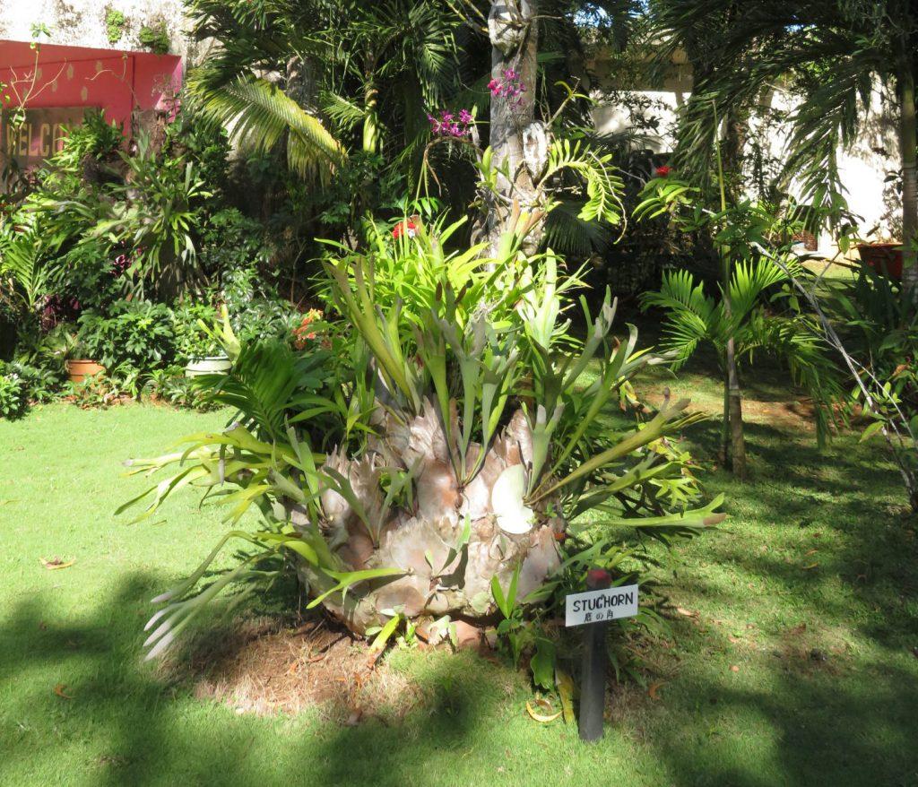 鹿の角という植物