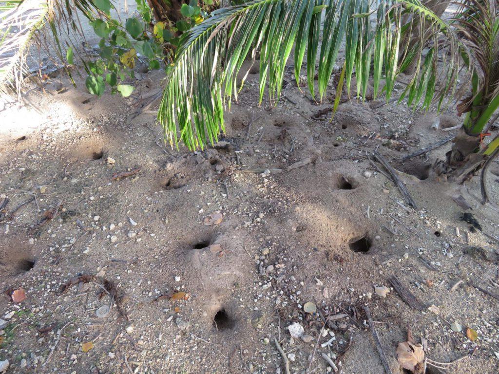 グアムの海岸の謎の穴