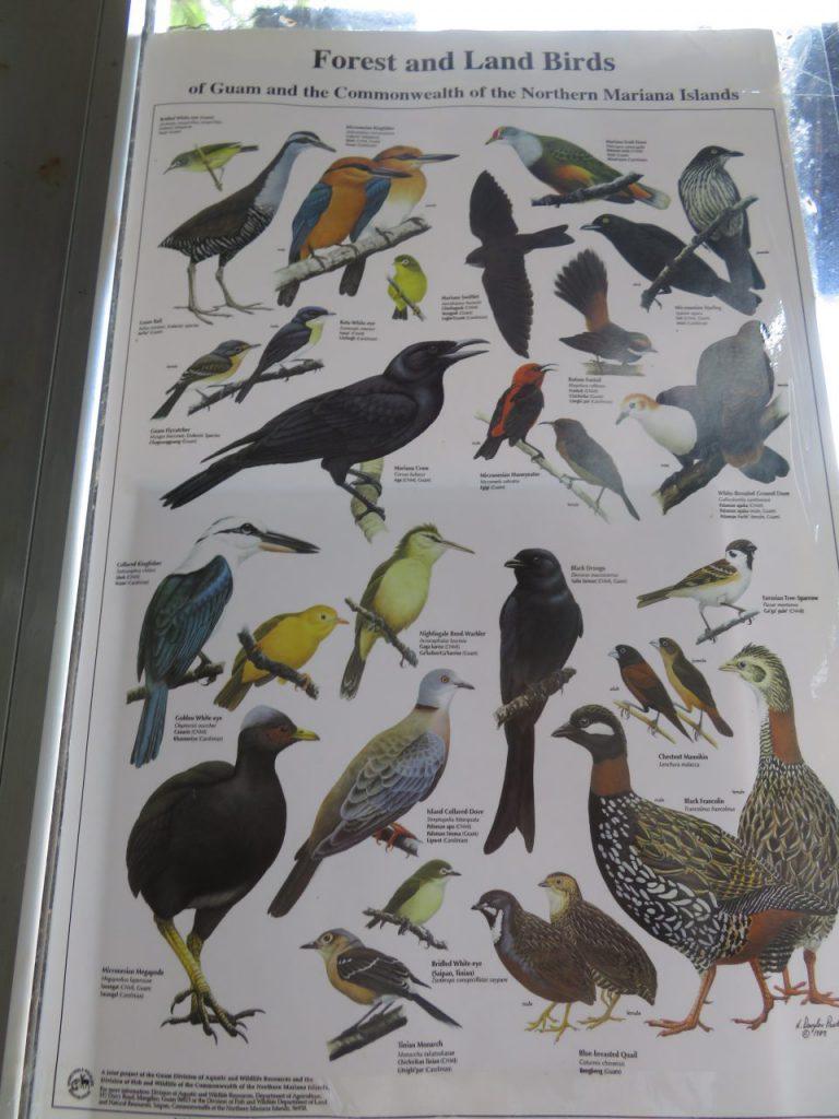 グアムの鳥一覧①