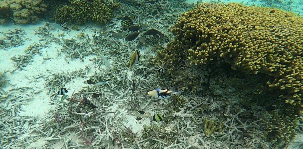 【グアム】魚たちの宝庫!タモン湾イパオビーチ【2020年冬】