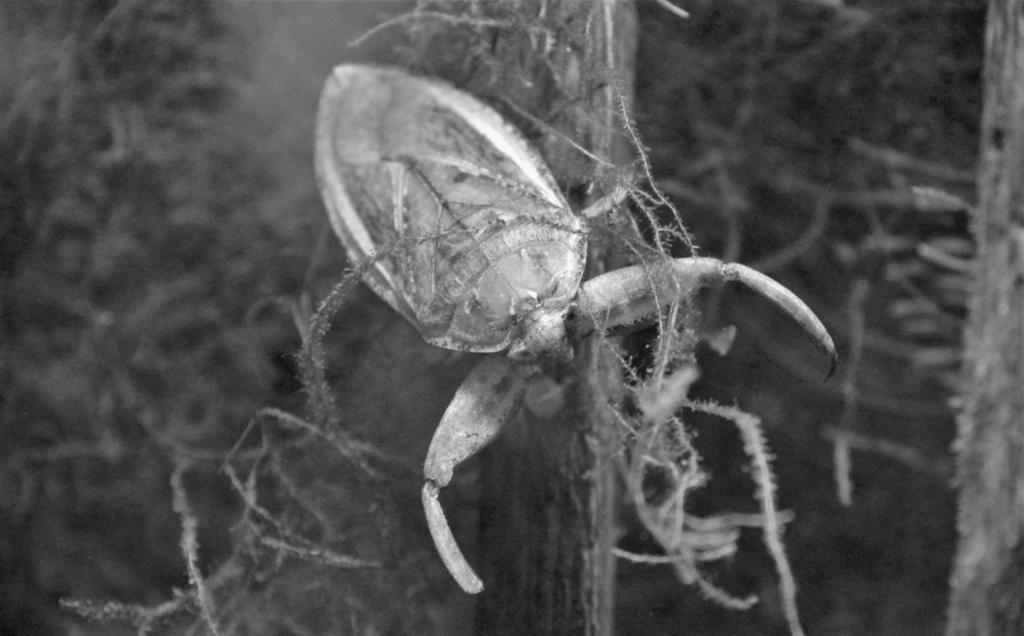 希少生物を守る「種の保存法」とは【どんな法律?】