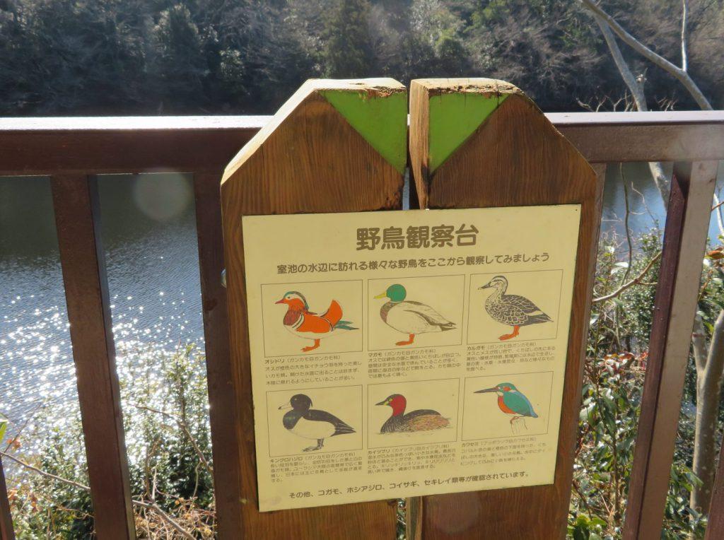 野鳥観察台から見られる鳥