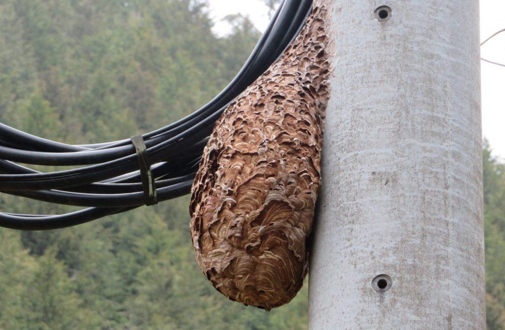 巨大なハチの巣