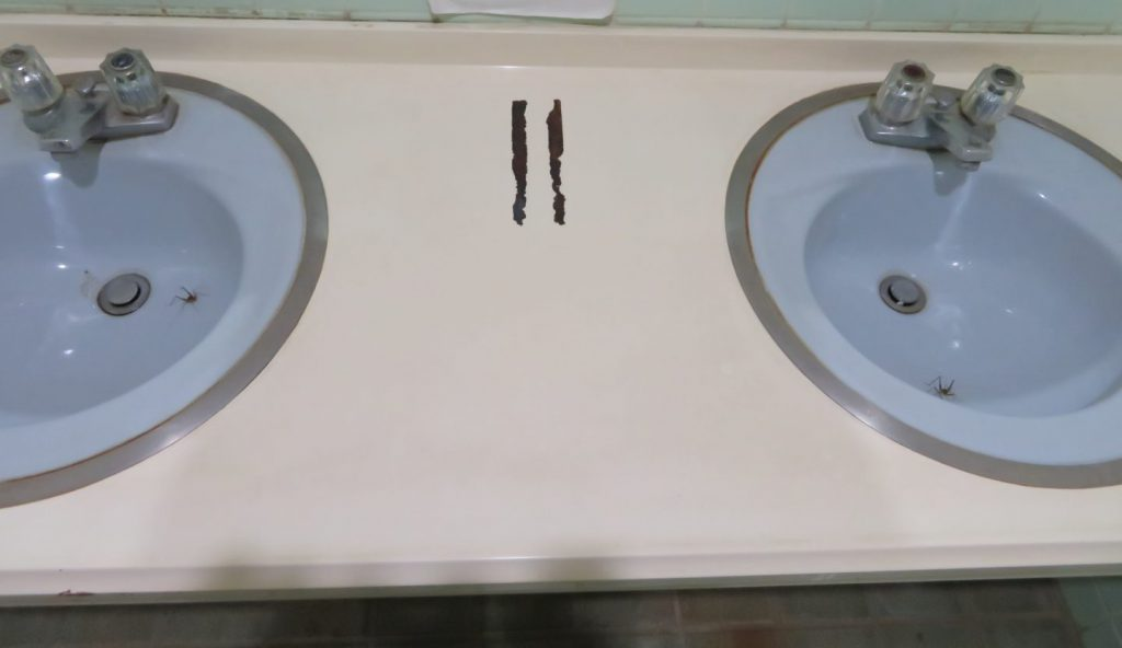 トイレの手洗い場にいるマダラカマドウマ