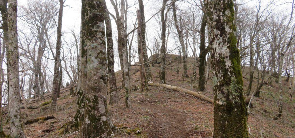 釈迦ヶ岳の木々が多い道