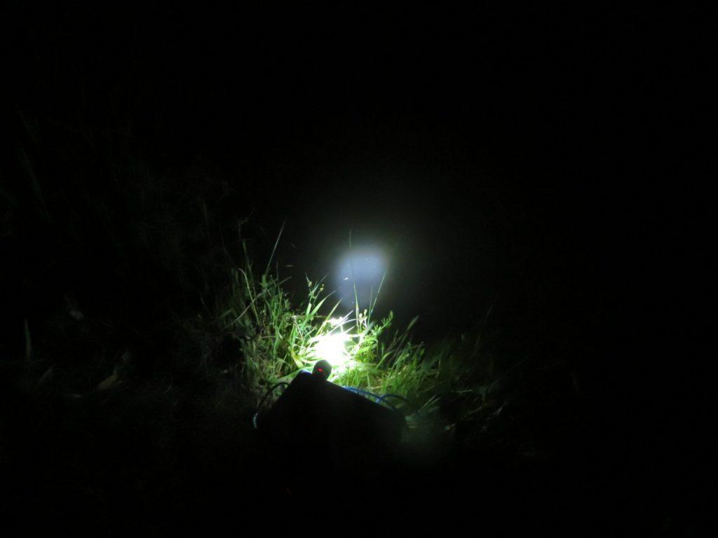 夜にライトで水面を照らしている