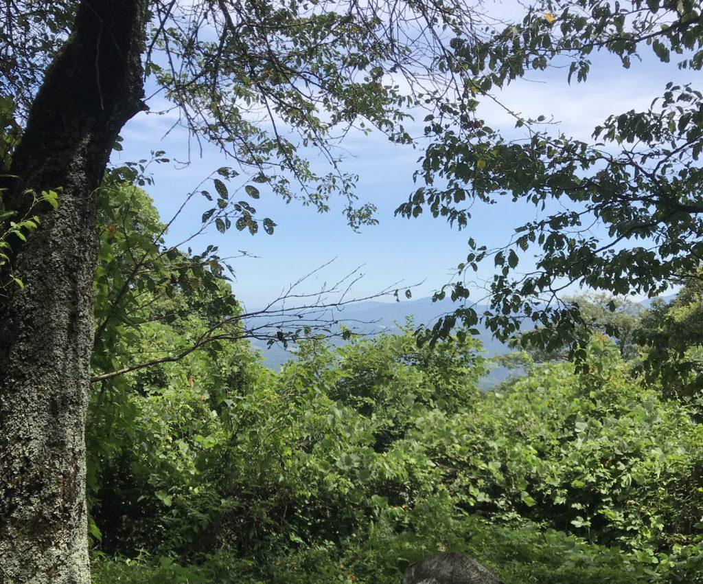 高鉢山山頂からの景色