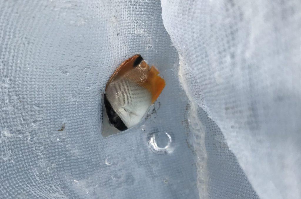 【潮溜まり】死滅回遊魚採集のコツ【初心者向け】