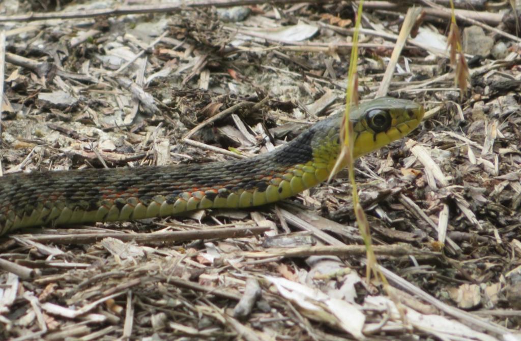 日本に生息する毒ヘビ全21種とその生息地