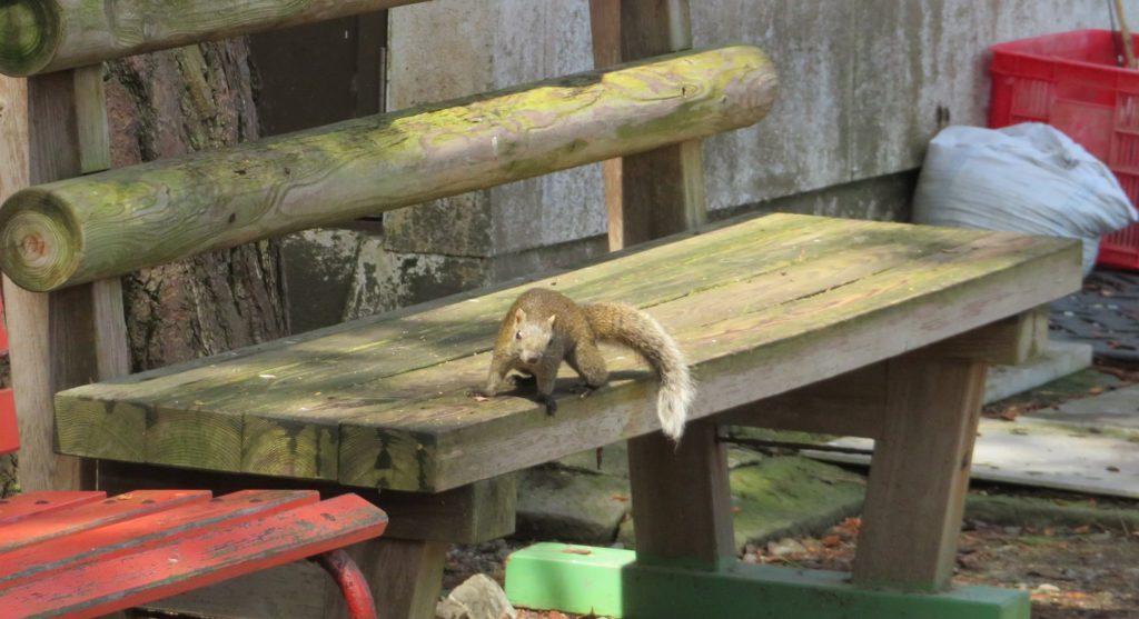 ベンチの上にいたタイワンリス