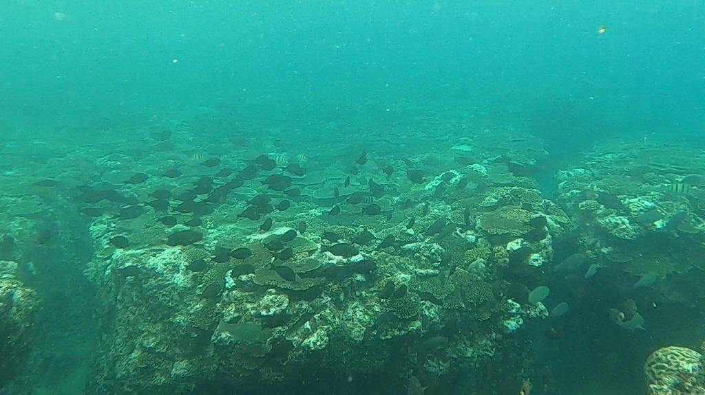 沖縄探索で出会った生き物⑦~サンゴ礁・磯編~【2020年夏】