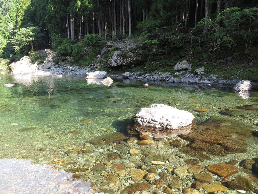 天川村の高山で生き物探し【2020年夏】