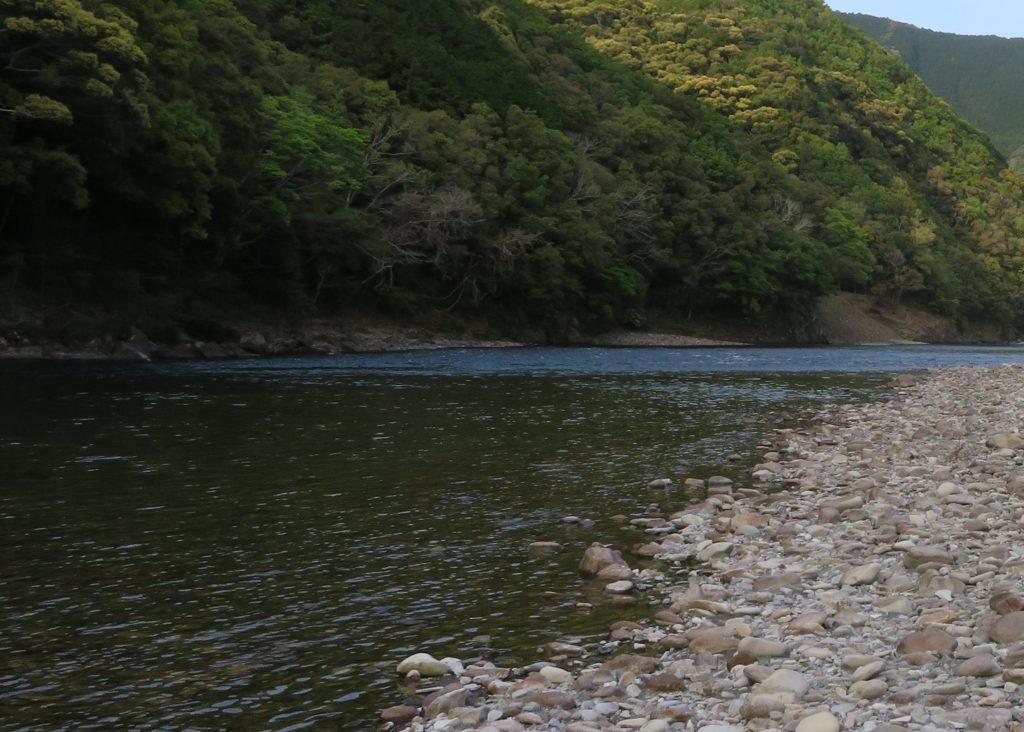 プラナリアを採集した川