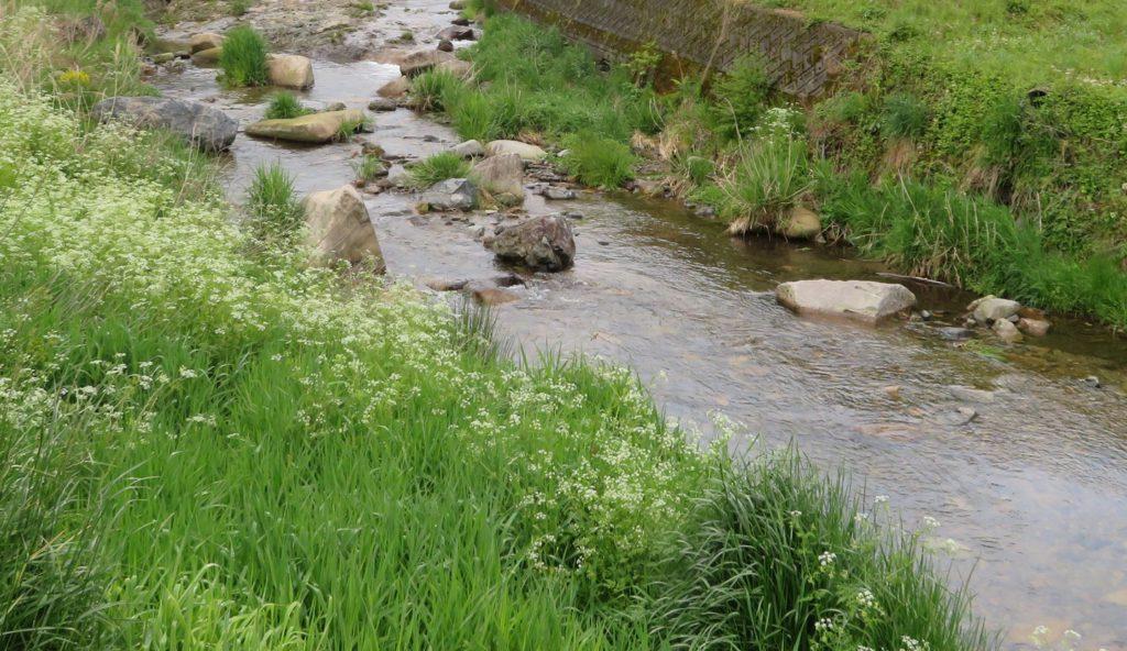 オオサンショウウオの棲む川