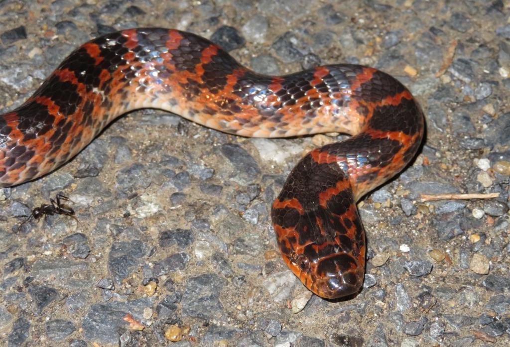 対馬のヘビ全3種類【探し方も】